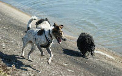 5 Elemente Hund