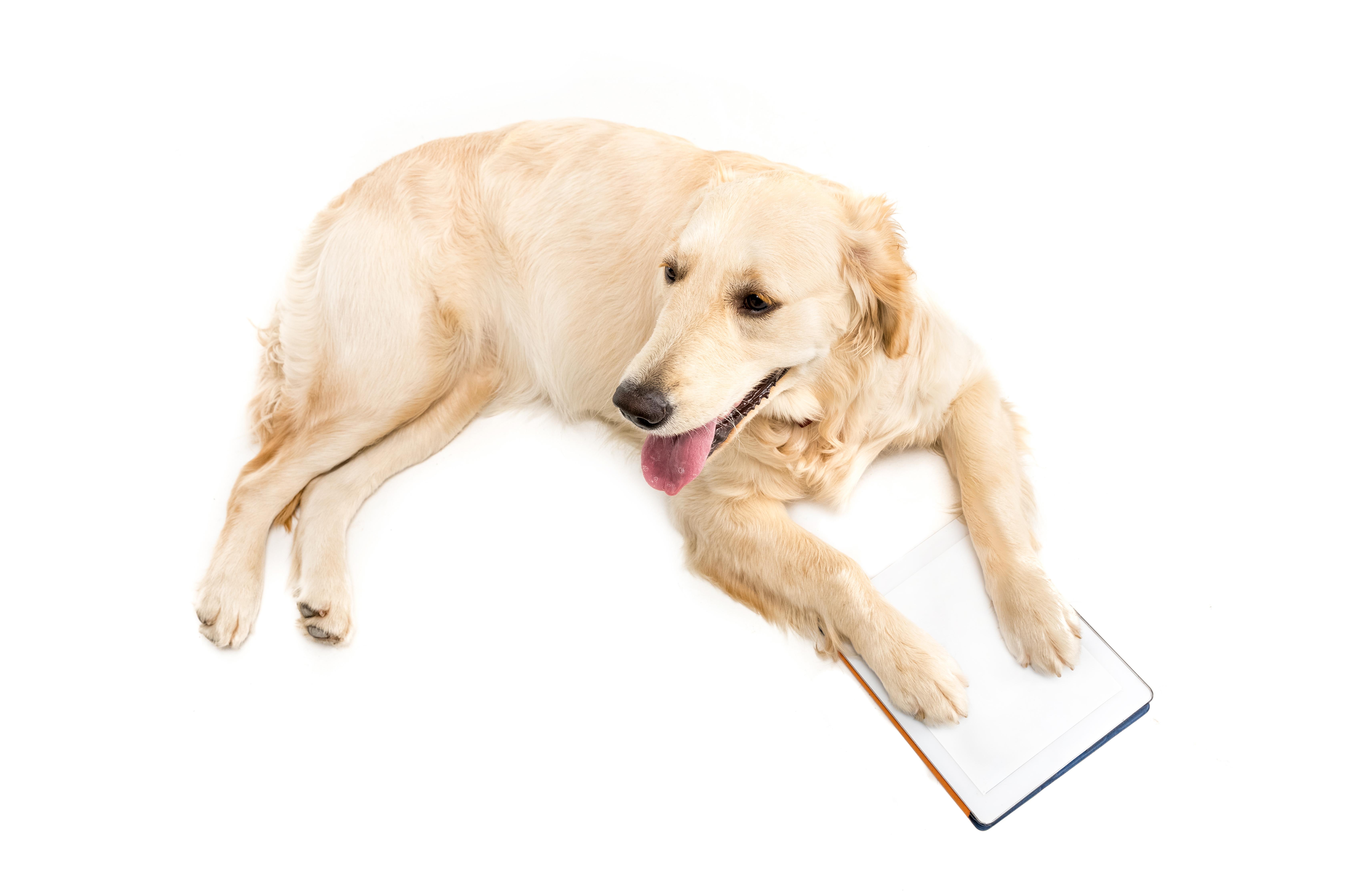 Kurse Hund