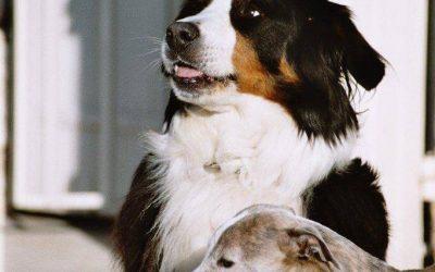 8 Tipps wann du Zeolith bei deinem Tier anwenden kannst.