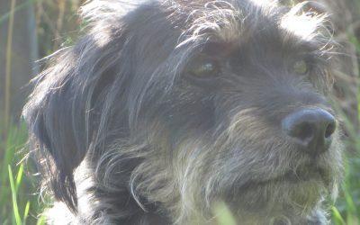 6 Akupunkturpunkte, die du bei epileptiformen Anfällen bei deinem Hund anwenden kannst.