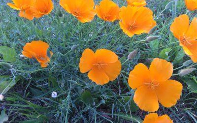 Tiere & Bachblüten – 11 Blüten die Du kennen solltest