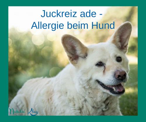 Juckreiz Allergie Hund