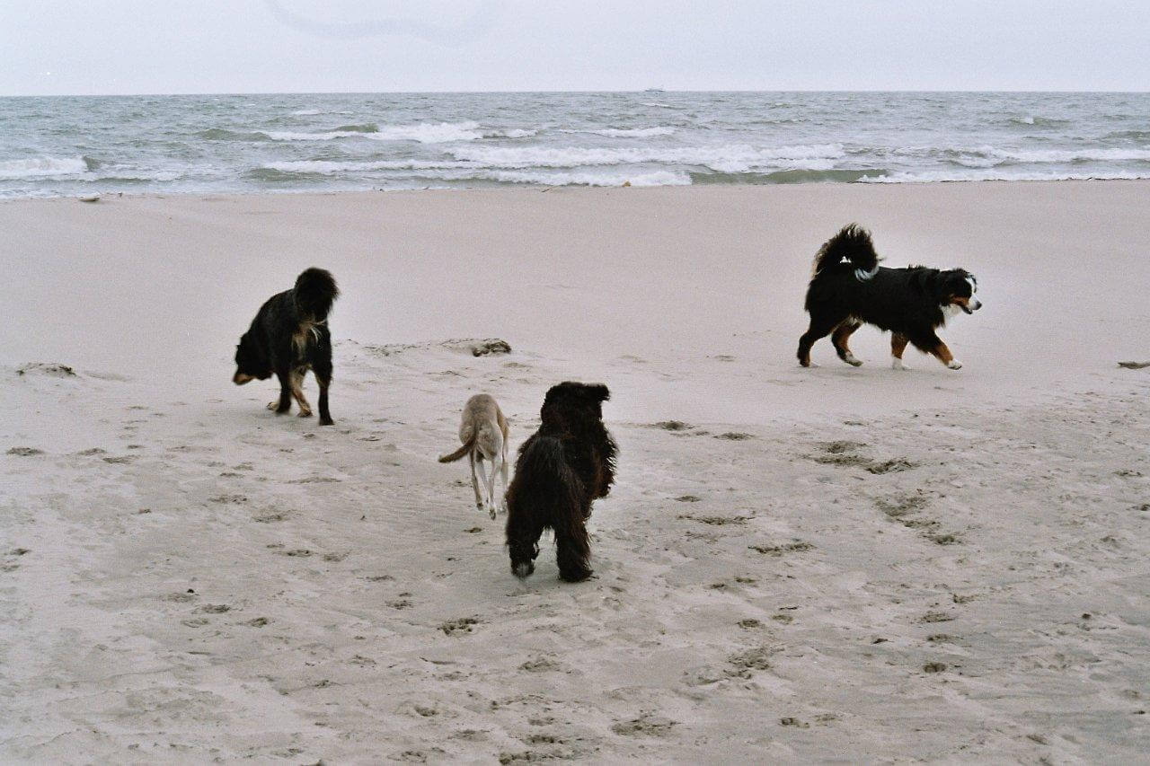 kinesiologie hund
