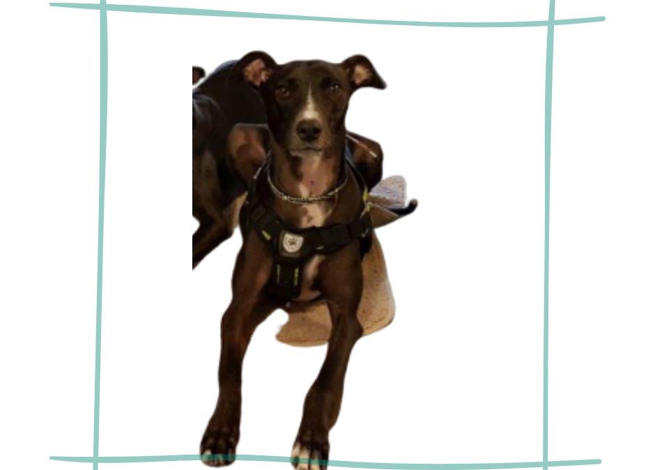 Toxoplasmose Hund