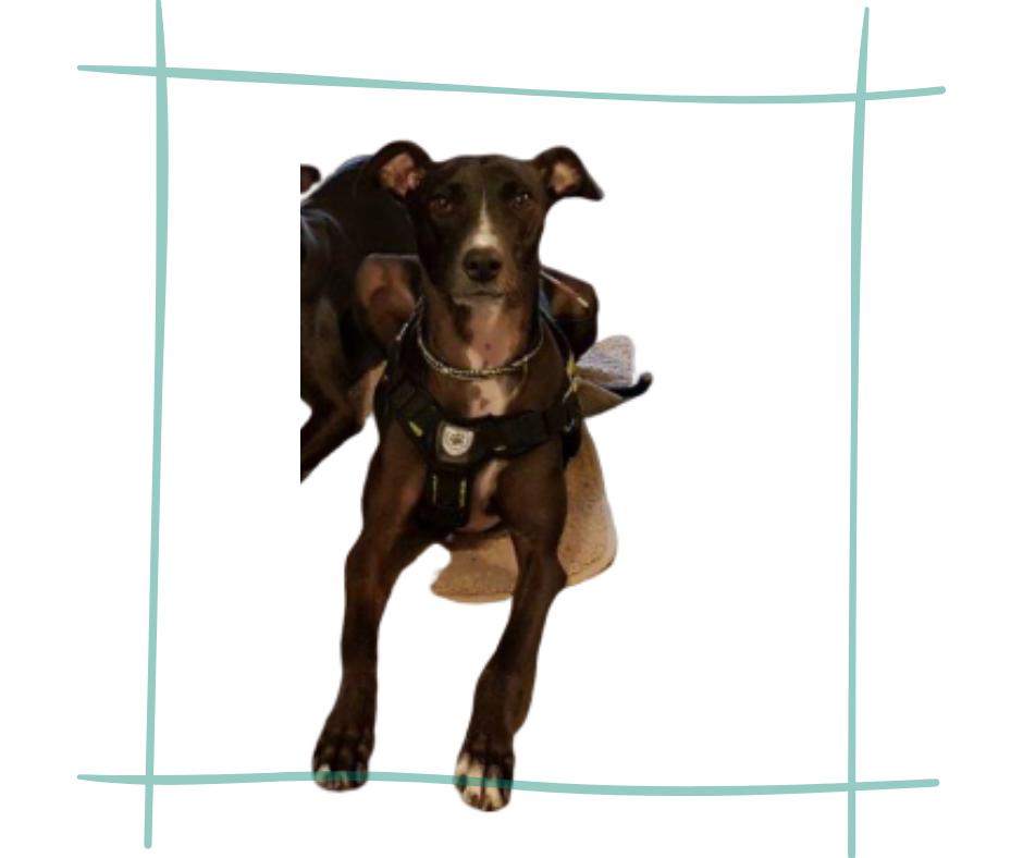 Srma Hund