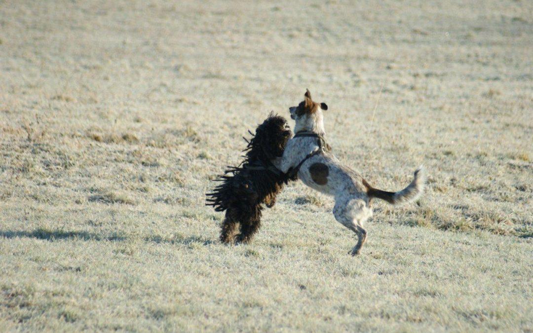 Wie entsteht Spondylose beim Hund?